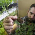 Lawyers debate lingering questions on PA's medical marijuana law