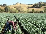 Lawmaker proposes an eight-hour workday for farmworkers