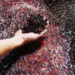 California billionaire buys Oregon wine brand Acrobat