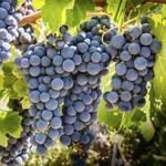 Wisconsin wineries tasting success despite regulatory pressure: The List slideshow