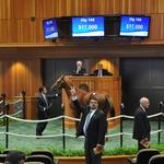 Market growing for young thoroughbred horses in New York