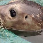 Aquarium of Niagara considers five finalists for new CEO