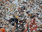 Wasn't that a party: See how the Giants celebrated