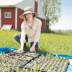 Agri-business showing growth in New York state