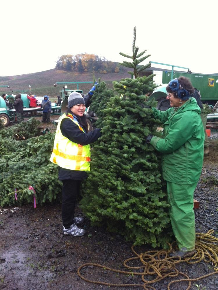 How Oregon plans to reverse Hawaii's Christmas tree rejection ...