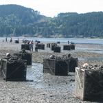Biggest state shellfish grower gains an edge through sustainability certification