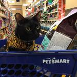 Up To Speed: PetSmart is a good boy, fetches $8.7B in sale (Video)