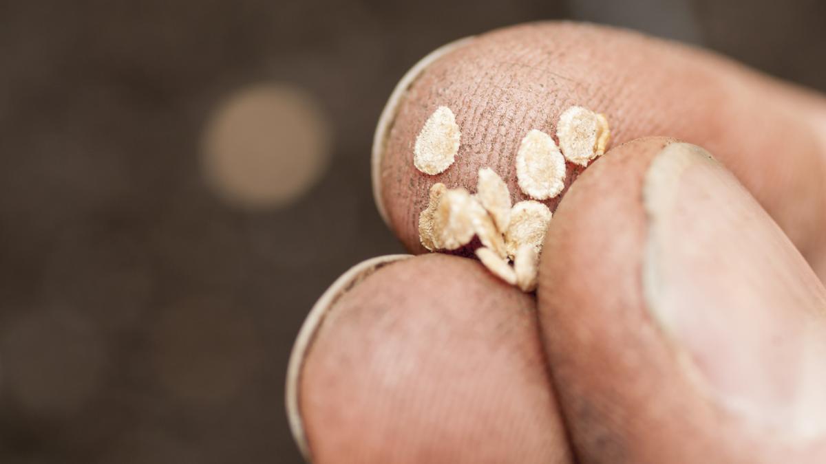BASF may keep seed science business near Davis - Sacramento Business
