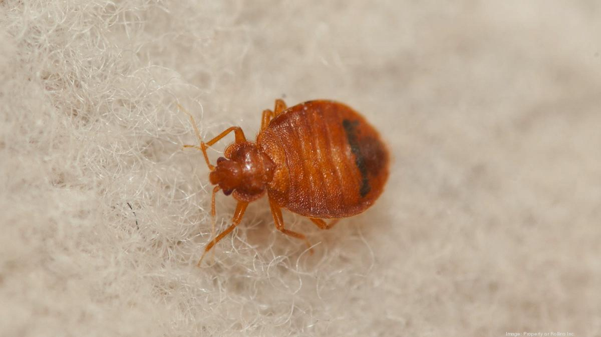 Baltimore Ranks No 1 In The U S For Bedbugs Baltimore