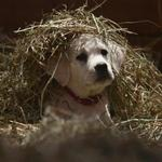 Doritos, cute puppy and avocados - who won the battle of the Super Bowl ads?