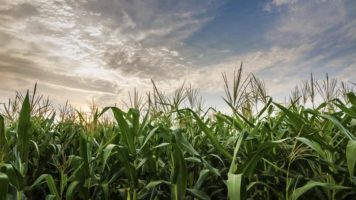 Local law firm wins $218 million verdict against agribusiness company