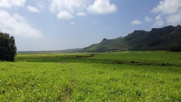 Hawaii Dairy Farms withdraws final EIS for Kauai dairy project