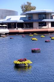 Floating flower pots decorate the lagoon near Future World.