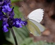 Several species of butterflies and moths inhabit the Butterfly Garden, which features tips on creating a butterfly-friendly garden.