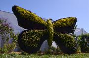 A large butterfly topiary marks the entrance to the Butterfly Garden.