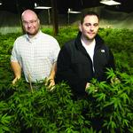 Pioneers of legal marijuana — they're a lot like you
