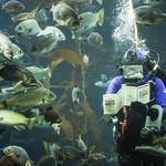 Exclusive: Monterey Bay Aquarium topped 2M visitors in 2014 — here's how the staff pulls it off (Photos)