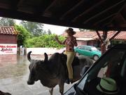 USF President Judy Genshaft rides a real Brahma bull.