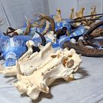 Skeletons on parade: Exhibits arrive at I-Drive 360's new attraction