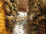 Bee smart: Alaska Airlines swats down a honey of a rumor