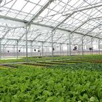 Giant greenhouse planned for Greater Dayton