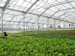 Giant greenhouse planned for Greater Cincinnati