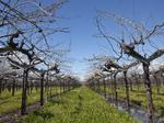 One of the U.S.' largest wine companies grabs two Sonoma Valley wineries
