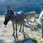 Arizona, <strong>Tom</strong> <strong>Brady</strong> and too many burros