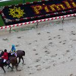 Why the Maryland Jockey Club GM thinks the Preakness benefits from its spot in the Triple Crown