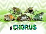 Shedd Aquarium taps Optimus Design to promote amphibians exhibition