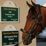 American Pharoah takes it easy at Churchill Downs after earning millions on the track