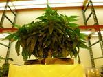 Marijuana startup LeafLine hunts for another big round of funding