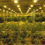 Medical marijuana maker Leafline loses two top executives