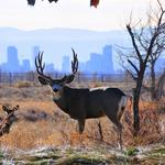 Colorado lawmakers want development restrictions lifted on Rocky Mountain Arsenal parcel