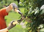 Know a good landscaper? TBBJ List survey is now open