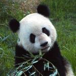 Memphis Zoo to host James Beard event