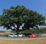 Acorn spells return for iconic oak tree at Virginia International Raceway