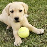 '<strong>Ritz-Carlton</strong>' for dogs open in Horsham