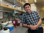 OHSU researcher successfully creates genetically modified human embryos