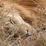So you've shot a famous lion and the Internet hates you. Now what?