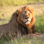 Can Cecil the lion's killer recover his reputation after damaging online comments?