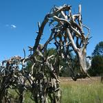 Postcard from the Denver Botanic Gardens: 'The Nature of Horses' (Video)