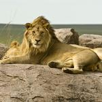 ​Five things you need to know today, and what to do after you murder a famous lion