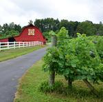 N.C. wine industry has $1.71 billion impact on economy