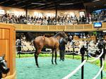 Investors, breeders gearing up for big week at Saratoga horse sales