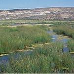 Oregon to help USDA distribute $350M for wetland, lands restoration