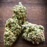 First Green Bank on why it no longer accepts medical marijuana biz