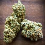 Why regulators are tight-lipped about Maryland medical marijuana applications