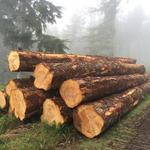 BLM's Oregon timber plan sparks questions from all sides