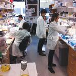 Panelists: Biomed research yields economic dividends